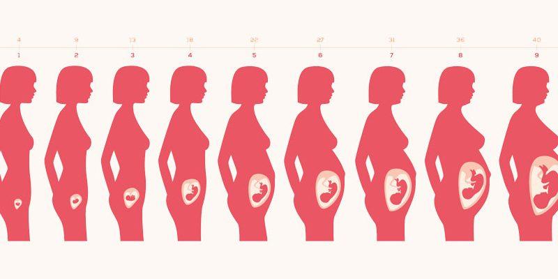 ventre femme enceinte