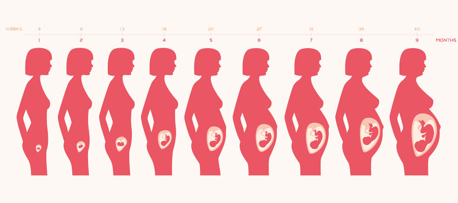 Ventre femme enceinte avant pendant et apr s la marmaille - Comment tomber enceinte du premier coup ...